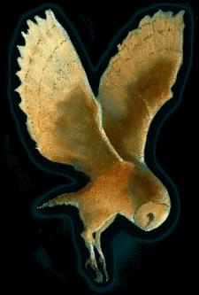 Treetops Owl